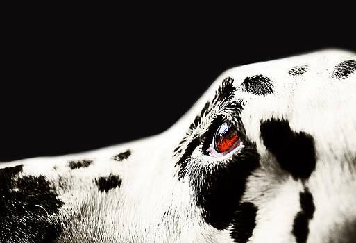 Jenny Rainbow - The Amber Eye. Kokkie. Dalmation Dog