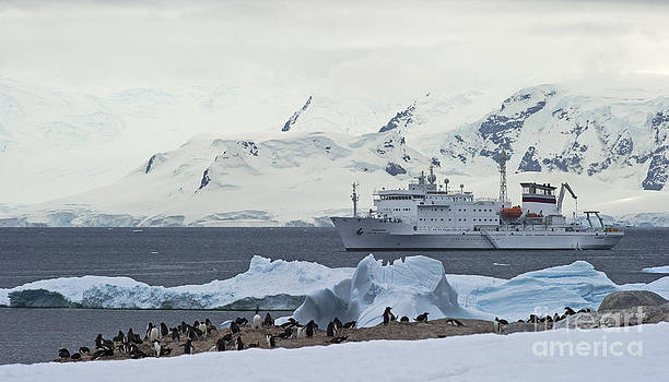 Nina Stavlund - The Antarctic Circle...