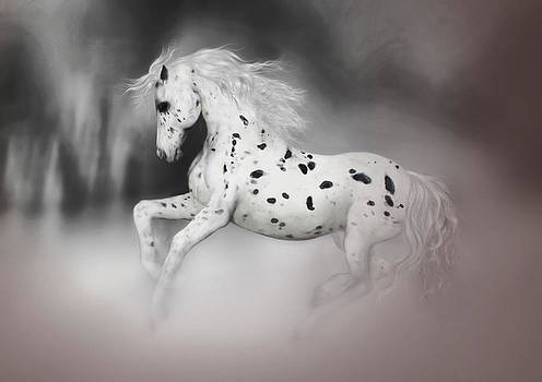 Valerie Anne Kelly - The Appaloosa