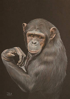 The Arm Wrestler - Chimpanzee by Jill Parry