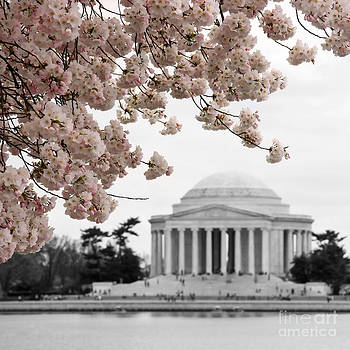 The art of Jefferson Memorial by Martina Roth