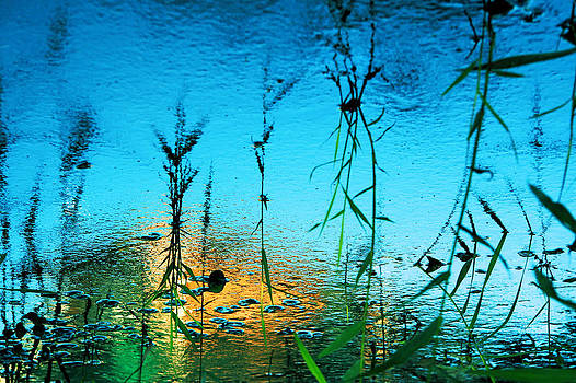 The art of nature by Beata  Czyzowska Young