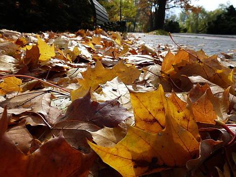 The autumn carpet by Janina  Suuronen