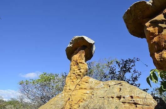 The Balance by Adelmo Leite de Sa