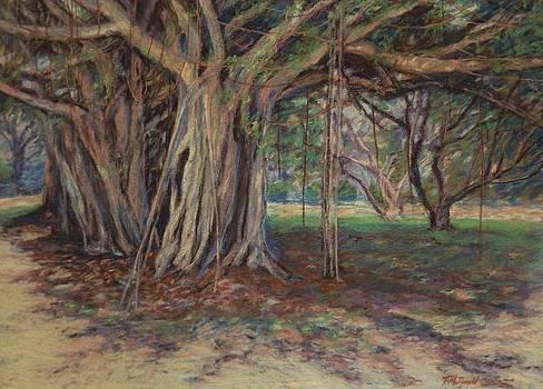 The Banyan Tree Sarasota by Tricia Mcdonald