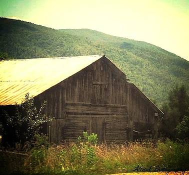 Allicat Photography - The Barn Stands Alone