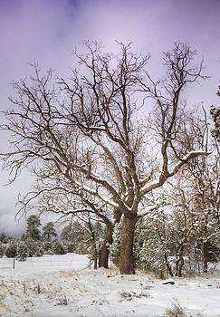 Saija  Lehtonen - The Barren Tree