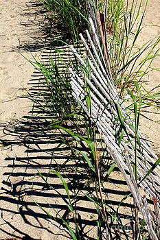 The Beach Fence by Jay Nodianos