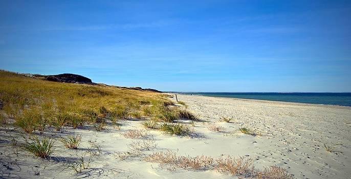 Marysue Ryan - The Quiet Beach
