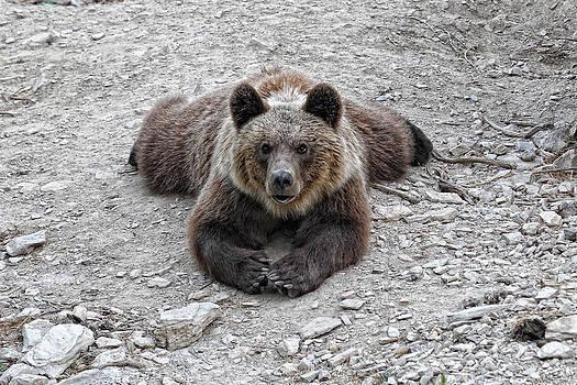The bear resting by Goyo Ambrosio