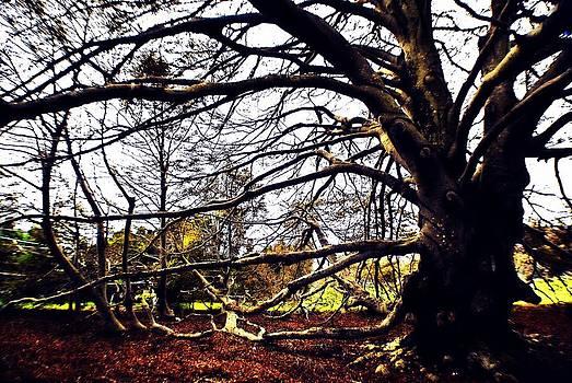 Marysue Ryan - The Beautiful Tree