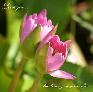 Patricia Twardzik - The Beauty in Your Life