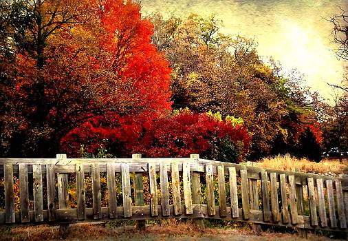 The Beauty of Fall by Jared Johnson