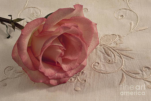 Sandra Foster - The Beauty Of Just One Rose