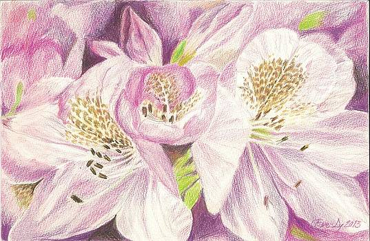 The beauty of Rhododendron by Eve-Ly Villberg