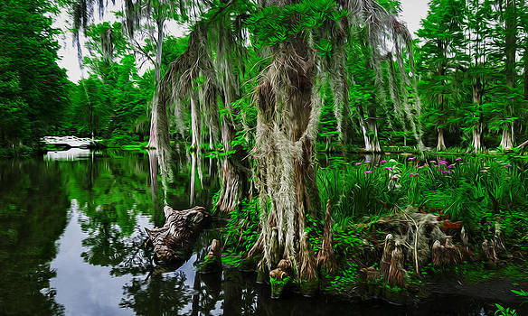 The Beauty of the Swamp by Ryan Manuel