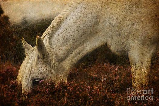 Angel Ciesniarska - the bed of heather