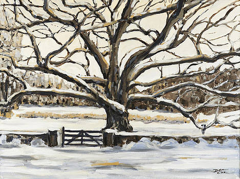 The Bedford Oak Winter by David  Llanos