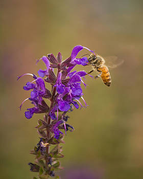 The Bee's Knees by Dawn Morrow