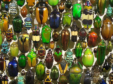 The beetles collection by Danielle Bedard