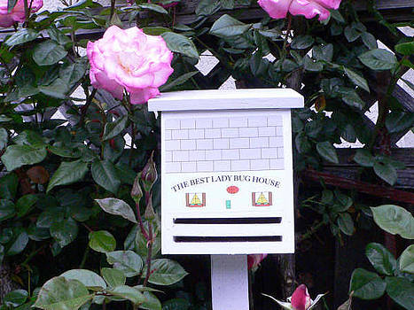 The Best Lady Bug House by John Pavon