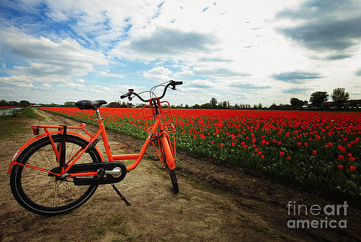 LHJB Photography - The bicycle