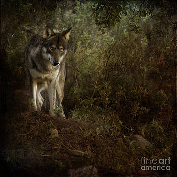 Angel Ciesniarska - the big and not too bad wolf