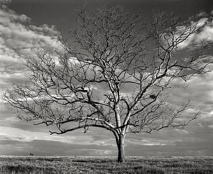 The Bird Nest by Jonathan Wilkins
