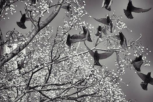 Jason Politte - The Birds