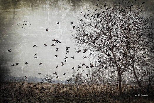 The Birds by Jeff Swanson