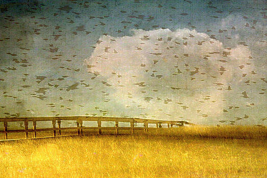 Birds over Bridge by Marysue Ryan