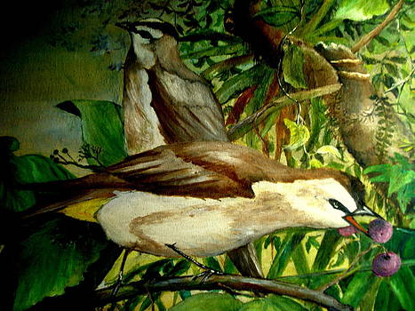 The Birds of Bali by Jason Sentuf