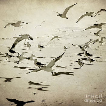 The Birds by Sharon Kalstek-Coty