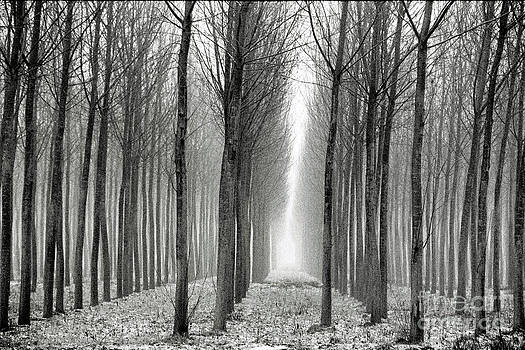 The black-and-white forest  by Arie Arik Chen