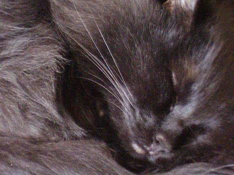 The Black Cat by Yvette Pichette