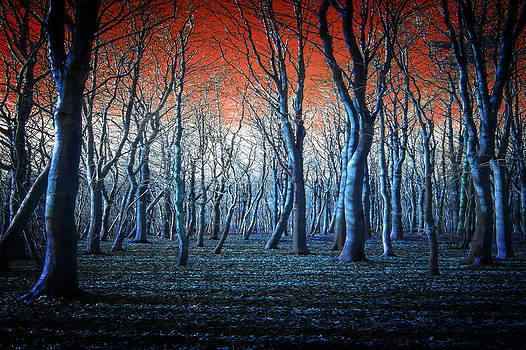 The Blue Forest by Neil Hemsley