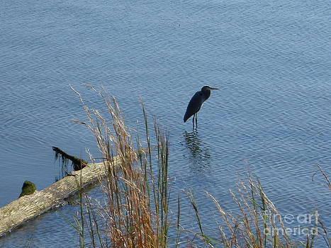 The Blue Heron by Stacy Frett