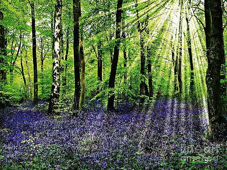 The Bluebell Woods by Morag Bates