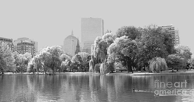 The Boston Public Garden by Ellen Ryan