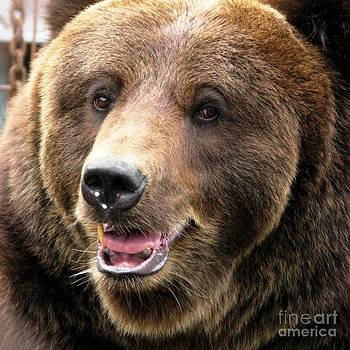 The Brown Bear In Close Up Square Format by Ausra Huntington nee Paulauskaite