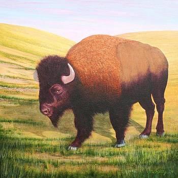 The Buffalo by J W Kelly
