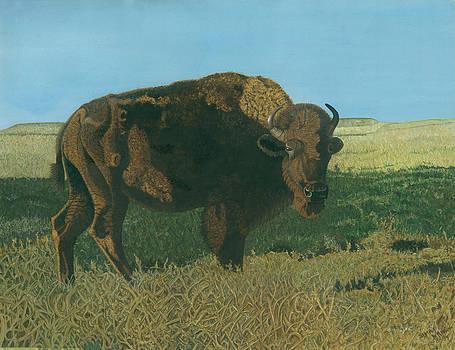 The Buffalo by Shara  Wright
