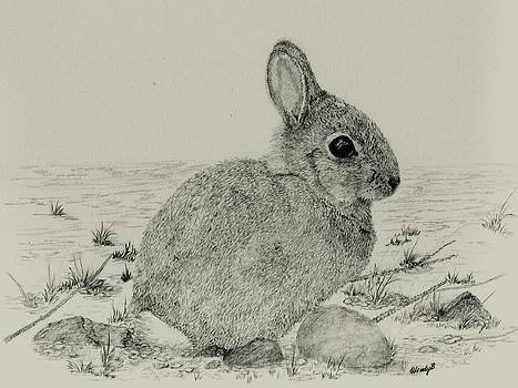 The Bunny by Wendy Brunell