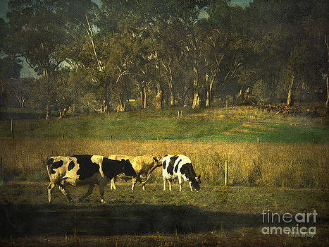 The bush the cows the gums ... by Chris Armytage