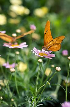 Saija  Lehtonen - The Butterfly and the Flower