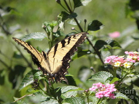 The Butterfly by Cindy Hudson