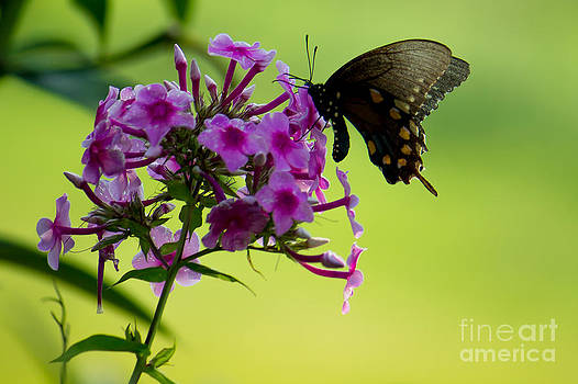 The Butterfly by Jennifer Marie Nature Exposed