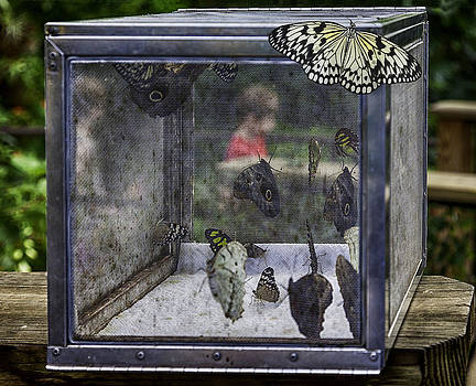 Lynn Palmer - The Butterfly Trap