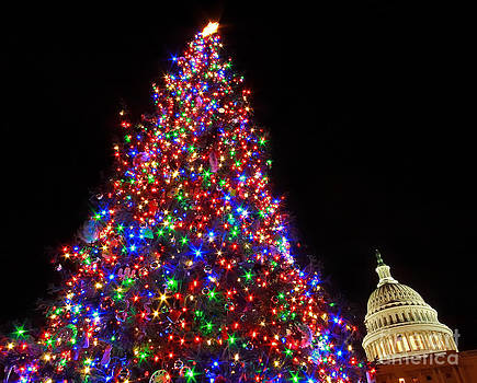 The Capitol Christmas Tree by SCB Captures