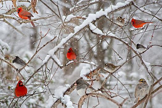 The Cardinal Rules by Betsy Knapp